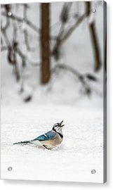 Acrylic Print featuring the photograph 2019 First Snow Fall by Cindy Lark Hartman