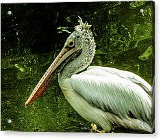 Animal Acrylic Print