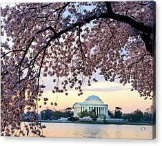 Jefferson Memorial Framed By Cherry Acrylic Print by Ogphoto