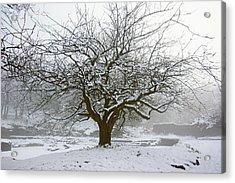 30/01/19  Rivington.  Japanese Pool. Snow Clad Tree. Acrylic Print