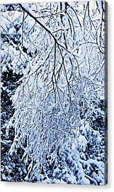 30/01/19  Rivington. Snow Covered Branches. Acrylic Print