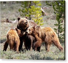 399 And Cubs Acrylic Print