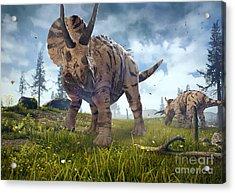 3d Rendering Of Triceratops Horridus In Acrylic Print