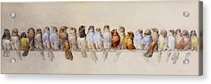 A Perch Of Birds  Acrylic Print