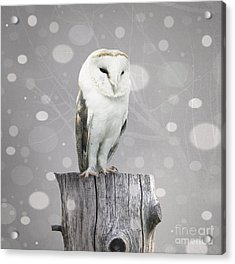 A Beautiful Barn Owl Above A Trunk With Acrylic Print