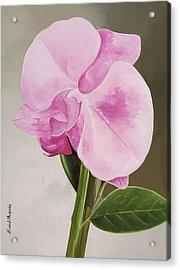 A Beautiful Rose Acrylic Print