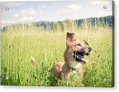 A Dog In The Park Acrylic Print