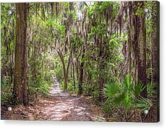 Acrylic Print featuring the photograph A Forest Trail by John M Bailey