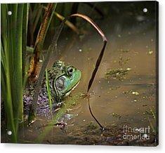A Frog Waits Acrylic Print