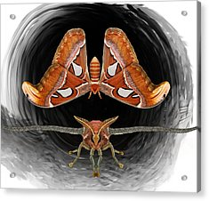 A Is For Atlas Moth Acrylic Print
