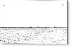 A Long Dusty Road Acrylic Print