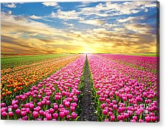 A Magical Landscape With Sunrise Over Acrylic Print