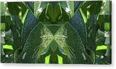 A-maize 2 - Flying Corn - Acrylic Print