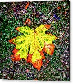 A New Leaf Acrylic Print
