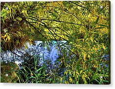 Acrylic Print featuring the photograph A Peek At The River by David Patterson