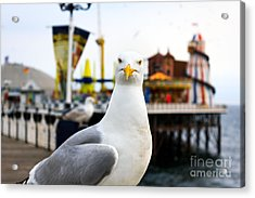 A Seagull At Brighton, Uk. Shallow Acrylic Print