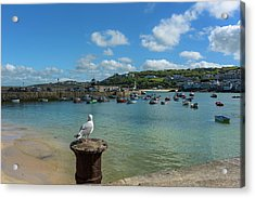 A Seagull Dreaming At The Harbour Acrylic Print