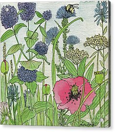 A Single Poppy Wildflowers Garden Flowers Acrylic Print