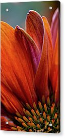 Acrylic Print featuring the photograph A Slice From The Cone by Dale Kincaid