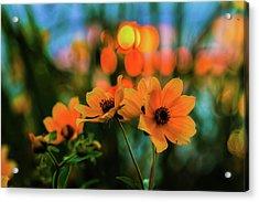 Sunflower Bokeh Sunset Acrylic Print