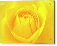 A Yellow Rose For Joy And Happiness Acrylic Print