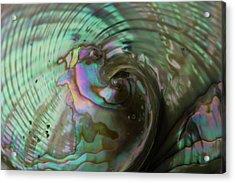 Abalone_shell_9903 Acrylic Print