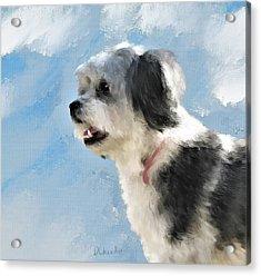 Abby 1 Acrylic Print