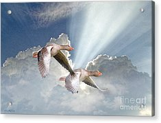 Above The Clouds The Sky Is Blue Acrylic Print