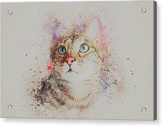 Abyssinian Cat Acrylic Print