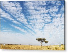 Acacia Trees In The Masai Mara Acrylic Print