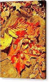 Acorns Fall Maple Oak Leaves Acrylic Print