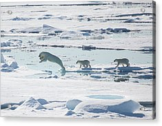 Across The Sea Ice Acrylic Print by Galaxiid