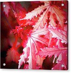 Actual Colors - Acrylic Print