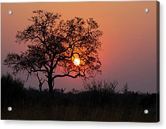 Acrylic Print featuring the photograph Africa Sunset by John Rodrigues