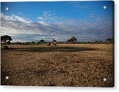 Amboseli Acrylic Print