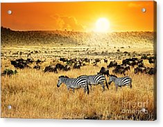 African Landscape. Zebras Herd And Acrylic Print