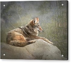Afternoon Repose Acrylic Print