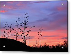 Acrylic Print featuring the photograph Agave Sunset 1 by Dawn Richards
