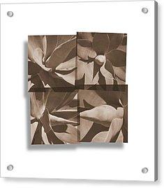 Agaves Acrylic Print
