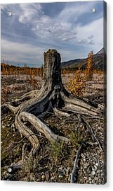 Acrylic Print featuring the photograph Age-old Stump by Fred Denner