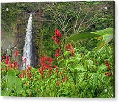 Acrylic Print featuring the photograph Akaka In Red by Denise Bird