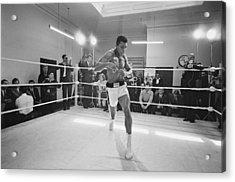 Ali In Training Acrylic Print by R. Mcphedran