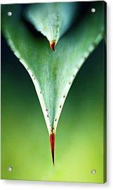 Aloe Thorn And Leaf Macro Acrylic Print