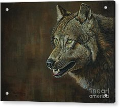 Alpha Male ......the Gray Wolf Acrylic Print