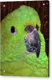 Acrylic Print featuring the photograph Amazon Parrot by Debbie Stahre
