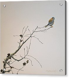 Acrylic Print featuring the painting American Kestrel by Peter Mathios