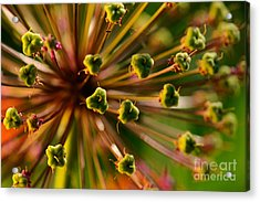 An Abstract Dynamic Plant Close-up Acrylic Print