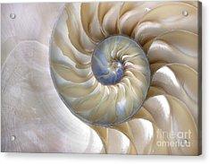 An Amazing Fibonacci Pattern In A Acrylic Print