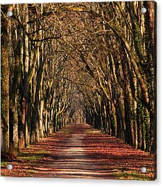 An Avenue Of Trees At The Chateau Of Acrylic Print
