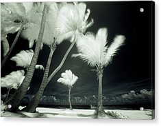 An Infrared Image Of Tall Palm Trees Acrylic Print